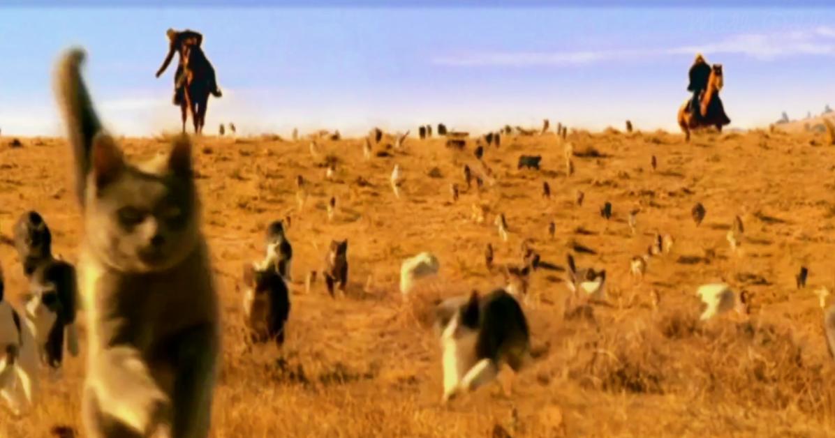 Cat Herding.png
