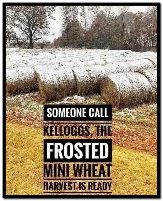 mini wheat 2.png