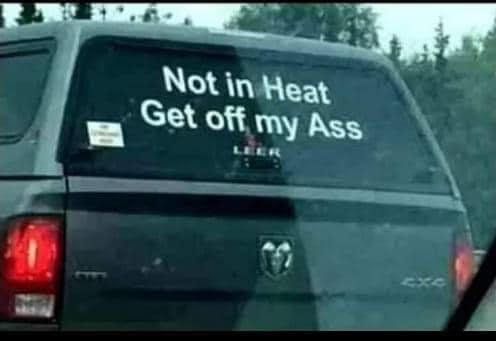 Not in heat.jpg
