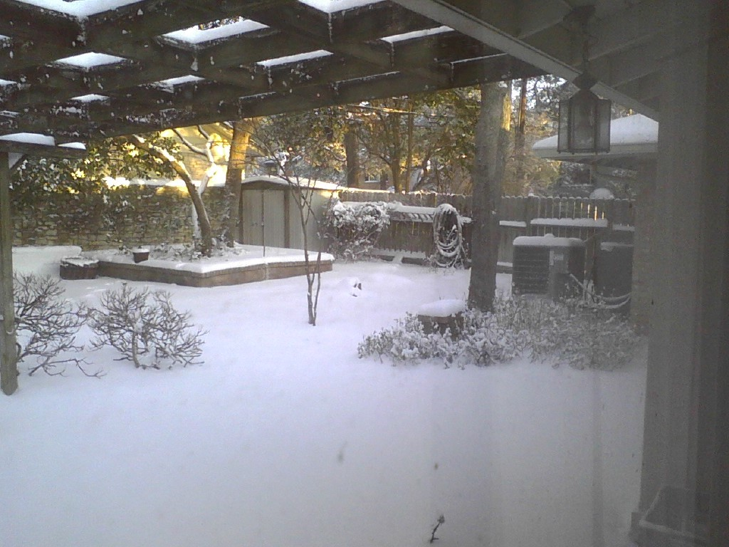 snow feb 2021 6.jpg