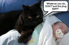 cat and baby.jpg