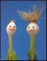 onions 2.jpg